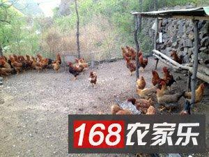 野三坡农家乐_野三坡农家院_野三坡食宿