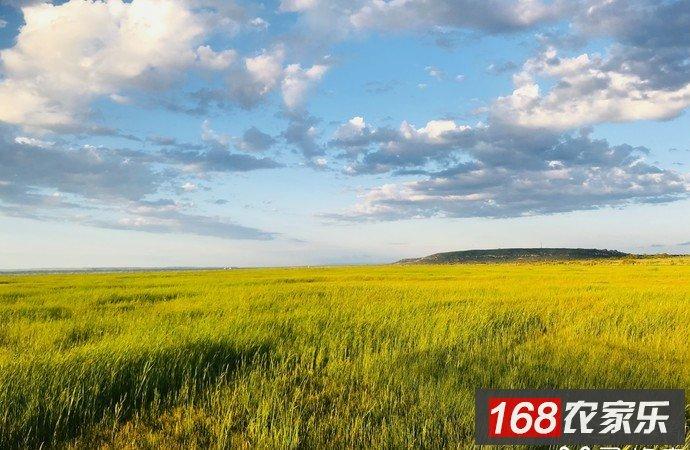 张北草原自驾游攻略-中都草原、草原天路自驾必看